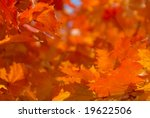 tree in autumn colors | Shutterstock . vector #19622506