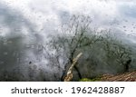 Reflection Of Branches In The...