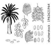 hand drawn dates fruits set....   Shutterstock .eps vector #1962621964