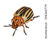 Colorado Beetle Isolated On...