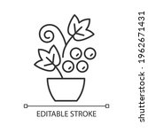 berry shrubs and vines linear... | Shutterstock .eps vector #1962671431