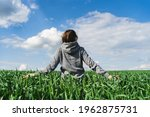 Young Green Wheat Field. Woman...