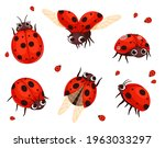 ladybug. flying closeup insects ... | Shutterstock .eps vector #1963033297