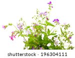 Wild Flowers Bunch Isolated On...