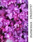 beautiful lilac flowers... | Shutterstock . vector #196324757
