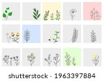 Set Of Natural Plants In Square ...