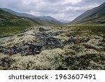 Reindeer Moss And Tundra Plants ...