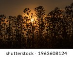 silhouettes of flowers and... | Shutterstock . vector #1963608124