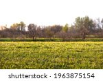 beautiful green meadow with... | Shutterstock . vector #1963875154
