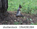 A Gray Brown Squirrel Holds A...