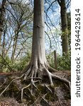 Strong Roots Of A Tree That...