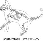 Hand Draw Skeleton Cat. Digital ...