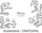 plumeria flower and leaf hand... | Shutterstock .eps vector #1964713441