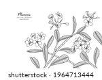 plumeria flower and leaf hand... | Shutterstock .eps vector #1964713444