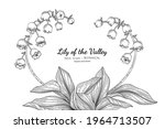 Lily Of The Valley Flower And...