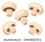 cartoon champignon. edible... | Shutterstock .eps vector #1964882551