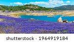 Panoramic Scenic View. Purple...