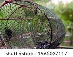 Closeup A Thai Farmer's Net...