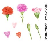 Carnation Elements Isolated For ...
