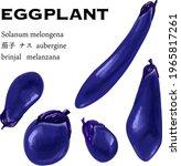 eggplant variation set vector...   Shutterstock .eps vector #1965817261