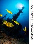 Golden Fish Swimming Around Th...