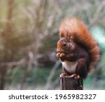 Squirrel On A Post Eating Nuts. ...