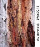 eucalyptus bark ii