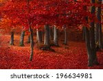 red trees in the forest during... | Shutterstock . vector #196634981