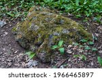 Moss Covered Rock In Forest