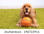 Stock photo english cocker spaniel on carpet with ball in room 196722911