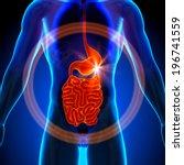 stomach  guts  small intestine  ... | Shutterstock . vector #196741559