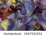 Pastel Color Collage Of Tulip...