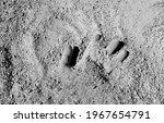 A Man's Hand Buried In An...