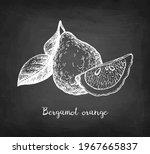 bergamot orange. chalk sketch... | Shutterstock .eps vector #1967665837