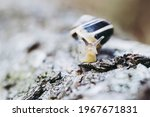 Snail Crawling On A Tree Trunk