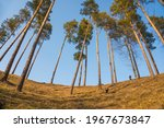 tall pine trees on the hill... | Shutterstock . vector #1967673847