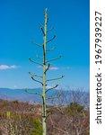 Agave Aloe Plant Shooting High...