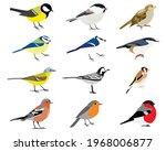 Set Of Bird  Yellow Wagtail ...