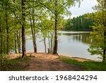 Spring Landscape Of Pine Forest ...