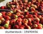 fresh apples | Shutterstock . vector #19690456