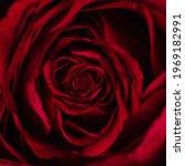 Beautiful Red Rose Petals...