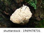 A Mushroom Full Of Dew Drops.