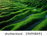 A Series Of Green Dunes With...