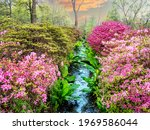 Beautiful nature in the springtime with pink flowers and a water stream in Isabella plantation of Richmond Park in London