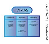 cyp1a2cytochrome p450 enzyme...   Shutterstock .eps vector #1969638754