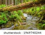 Fallen Tree Offers A Precarious ...