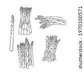 spring asparagus hand drawn... | Shutterstock .eps vector #1970100571