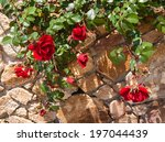 Red Roses And Stone Wall ...