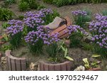 flowerbed with purple bulbs of...