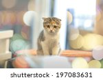 Stock photo little cute cat with bokeh background 197083631